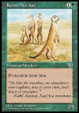 Karoo Meerkat