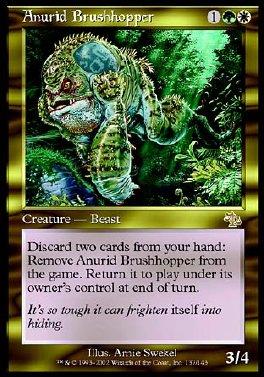 Anurid Brushhopper