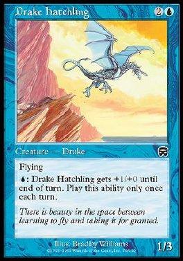 Cria de draco