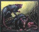 Ratas de la cienaga