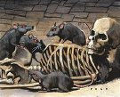 Ratas de cripta